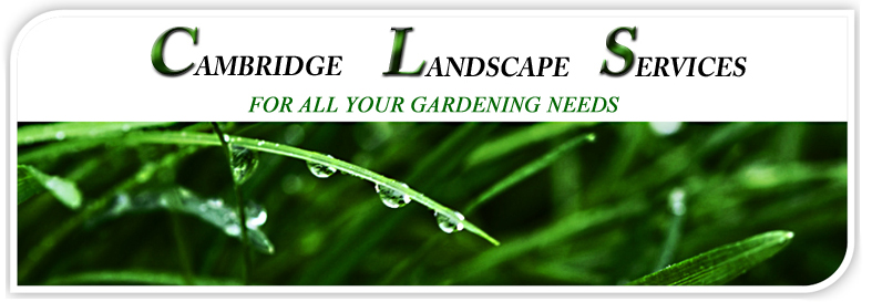 Cambridge Landscape Services for ALL your gardening needs, grass, hedges, lawn maintenance